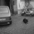 ベスパと犬と車と入口